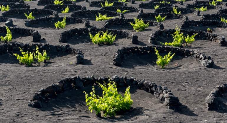La última tendencia en el vino es fijarse en el suelo