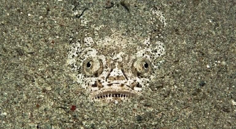 Miracielo, el monstruo marino que alimentará tus pesadillas