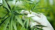 marihuana-istock-770.jpg