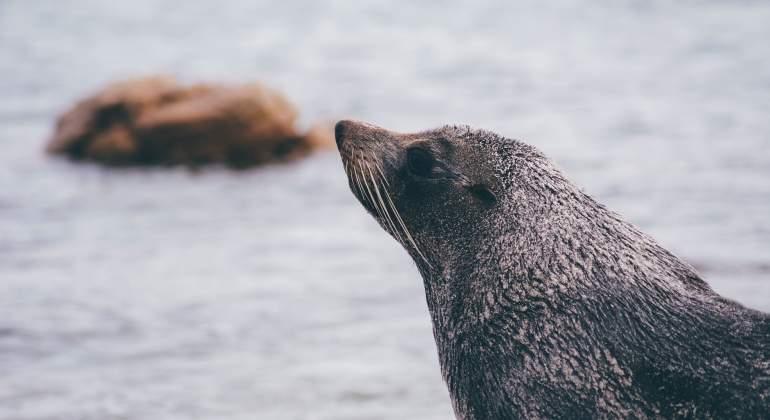 lobo-mar-artico-pixabay.jpg
