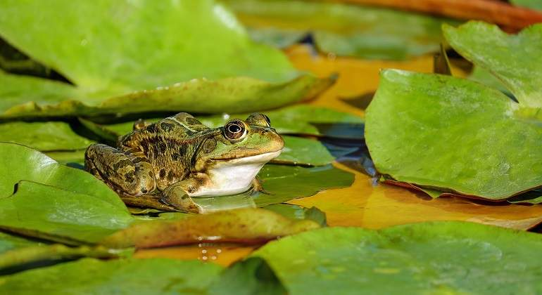 frog-2211972_1920.jpg
