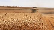 agricultura-trigo-archivo.png