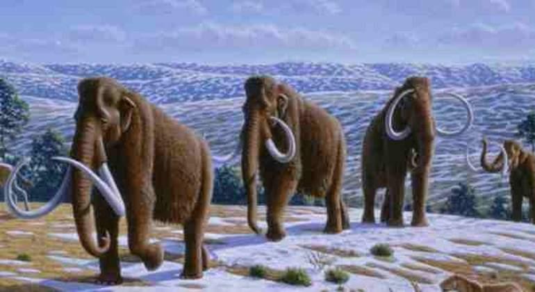 mamuts.jpg