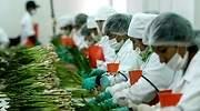 Agroexportacin