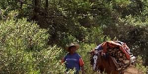 Trabajar para seguir siendo pobre, un drama de millones de mexicanos
