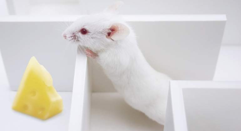 raton-queso-dreamstime.jpg