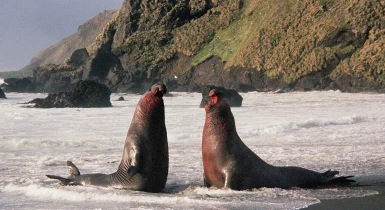 Los elefantes marinos del sur ayudan a monitorizar el deshielo de la Ant�rtida