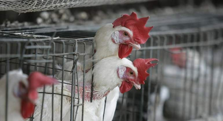 Suspende Brasil exportaciones de carne de 21 empresas