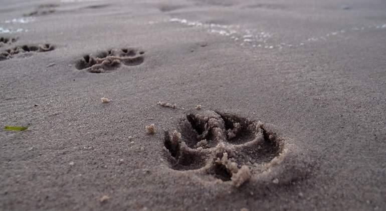 footprint-946189_1920.jpg