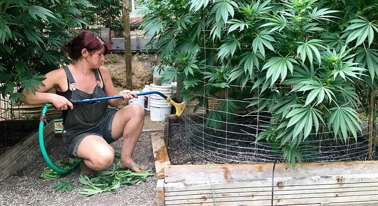 Marihuana-reuters1.jpg