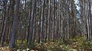 bosque-arboles-770.jpg