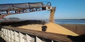 La sequía provoca el auge de la soja en Estados Unidos