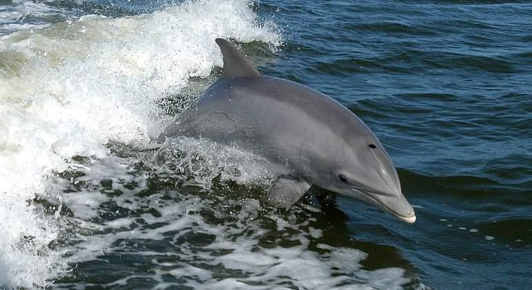 delfin-wikimedia-commons.jpg