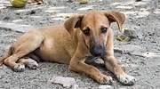mascota-perrito-notimex-770-420.jpg