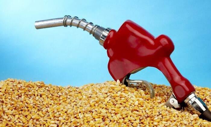 combustible-biodiesel-maiz-770-dreamstime.jpg