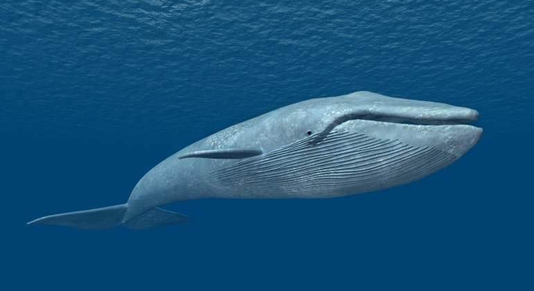 ballena-azul-dreamstime.jpg