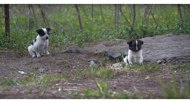 cachorros-chernobil.jpg