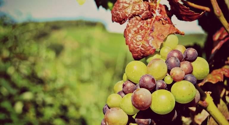 uva-vino-770.jpg