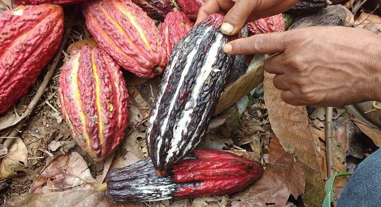cacao770x420.jpg