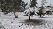 Chihuahua-nieve-Especial.jpg