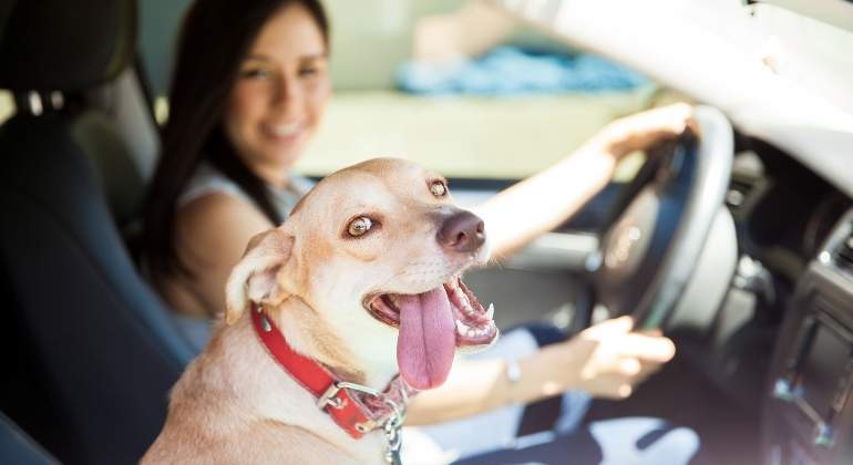 perro-coche-dreamsteam.jpg
