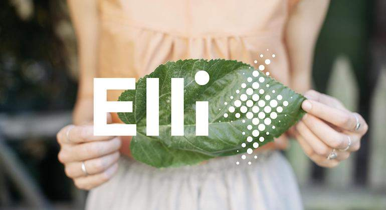 elli-grupo-vw-1.jpg