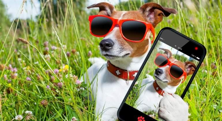 selfie-perro-dreamstime.jpg