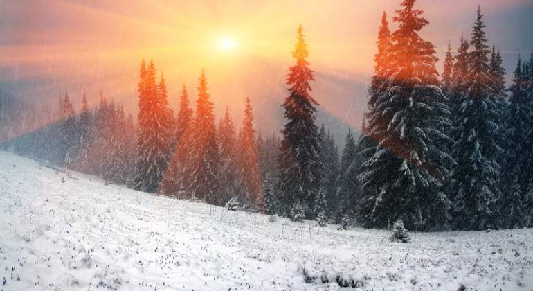 frio-bosque-nieve-dreams.jpg