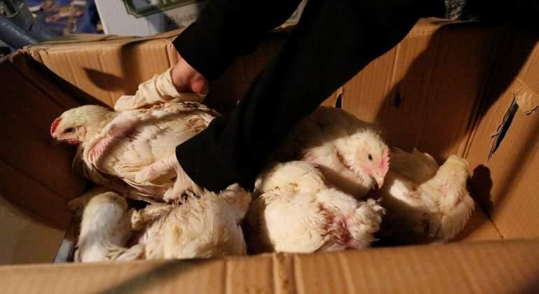 chicken-reuters.jpg