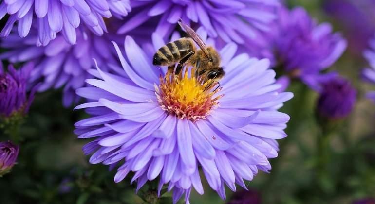 abeja-flor-polen-770x420-pixabay.jpg