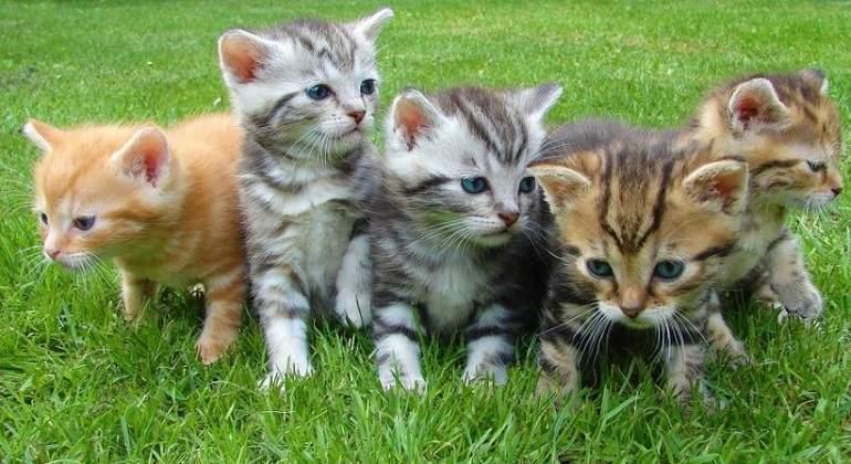 Grupo-de-gatitos