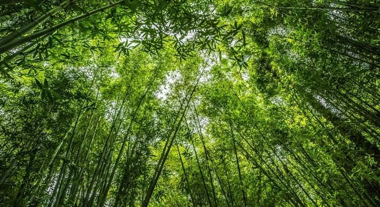 Las plantas llevan en la Tierra más de lo pensado