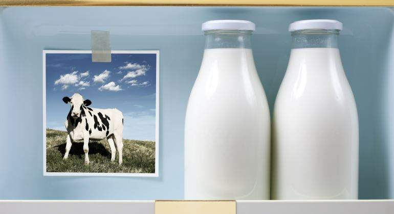 leche-botella-vaca-770.jpg
