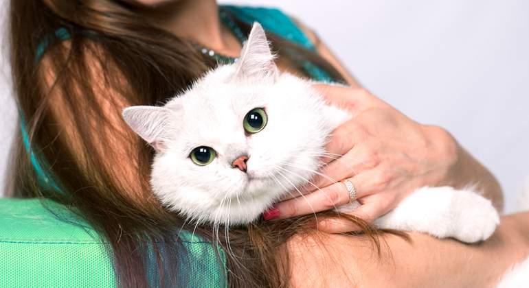 gato-dreamstime.jpg