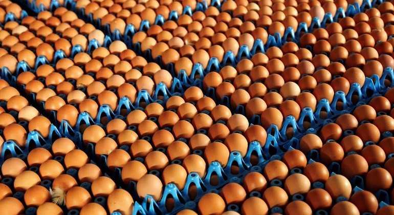 Detectan en Italia huevos contaminados por fipronil