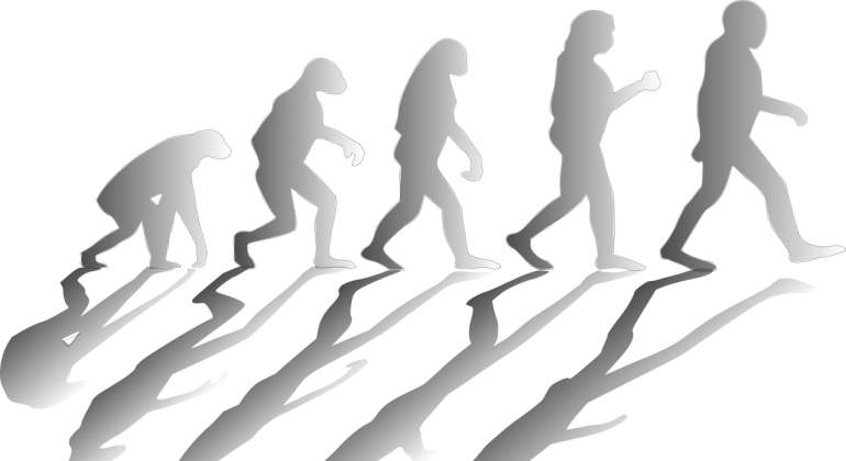 evolucion-pixabay.jpg
