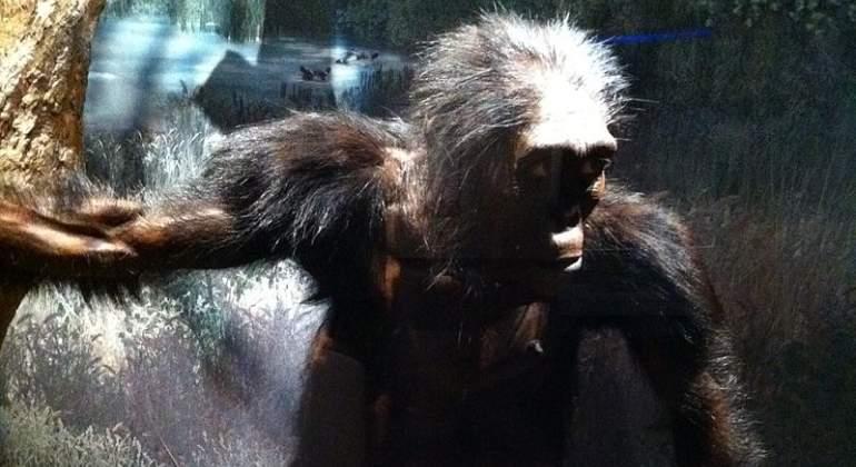 lucy-australopithecus-wikipedia.jpg