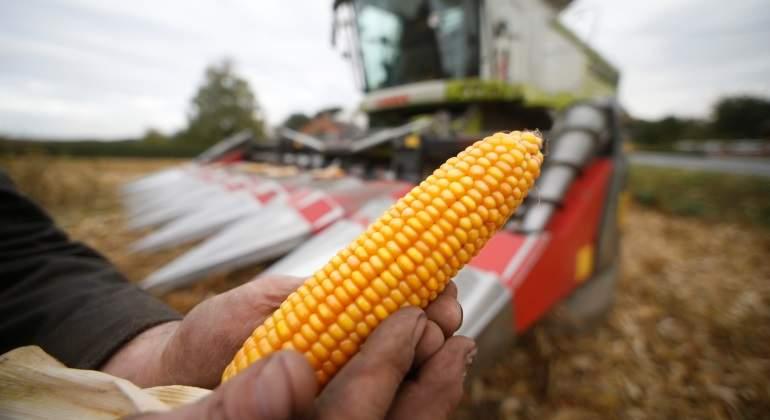 maiz-reuters-770.jpg