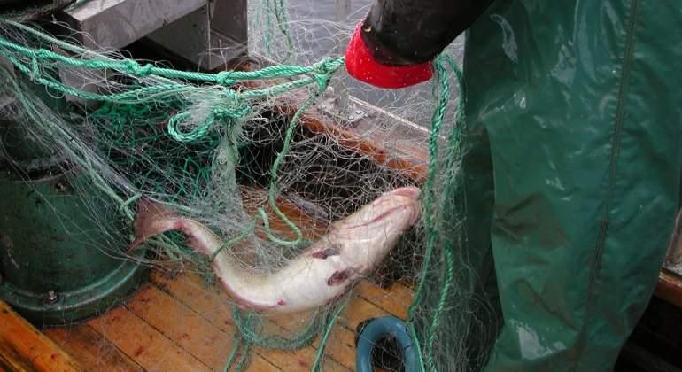 El milagro del Skrei, el bacalao que viene de Noruega