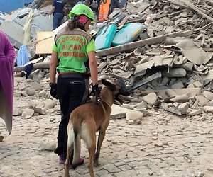 /imag/_v0/770x420/8/2/c/terremoto-italia-2016-12-reuters.jpg - 300x250