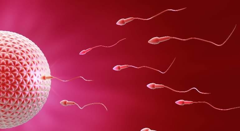 espermatozoides-dreamstime.jpg