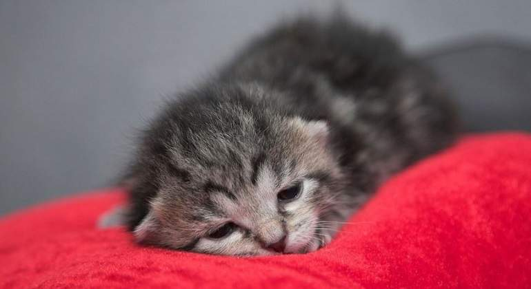 Cria-de-gato-durmiendo