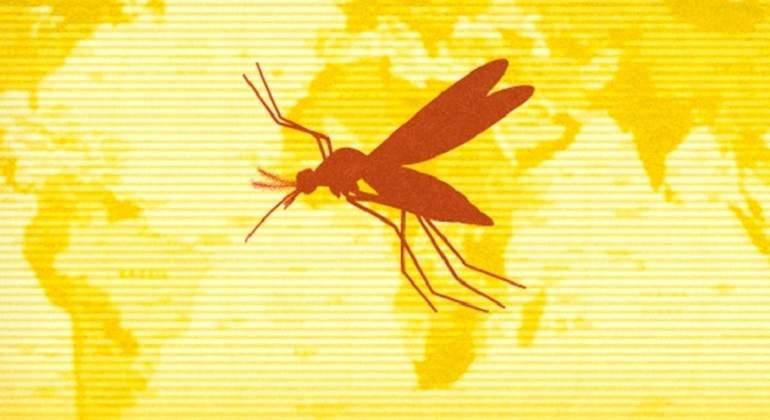 Confirman el fallecimiento de chileno que se contagió de fiebre amarilla