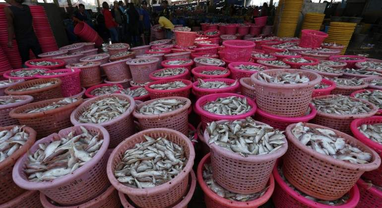 Resultado de imagen de Ecologistas en Acción denuncia la presencia de mercurio, cadmio o plomo en pescado