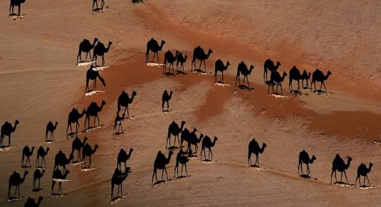 camelos-sombra-steinmetz.jpg