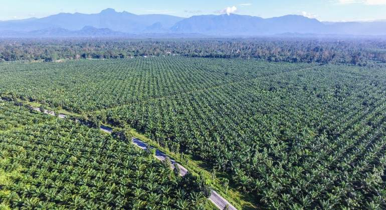 palm-oil-indonesia.jpg