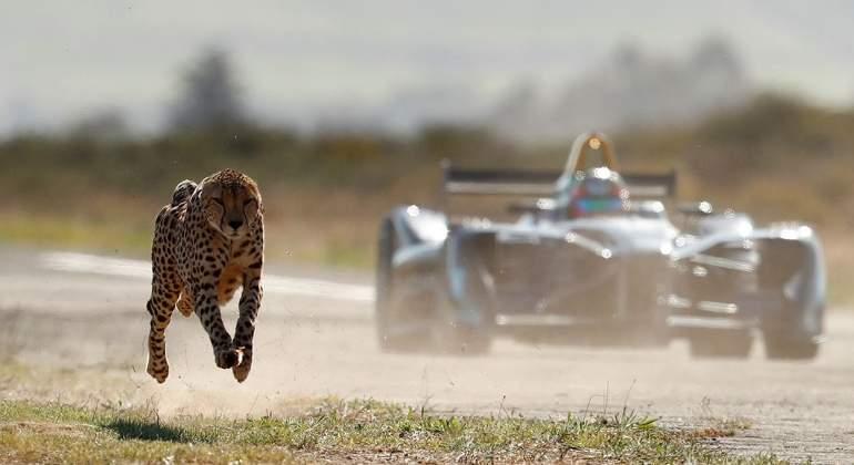 formula-e-vs-guepardo.jpg
