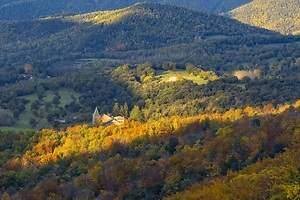 Los bosques vuelven a España