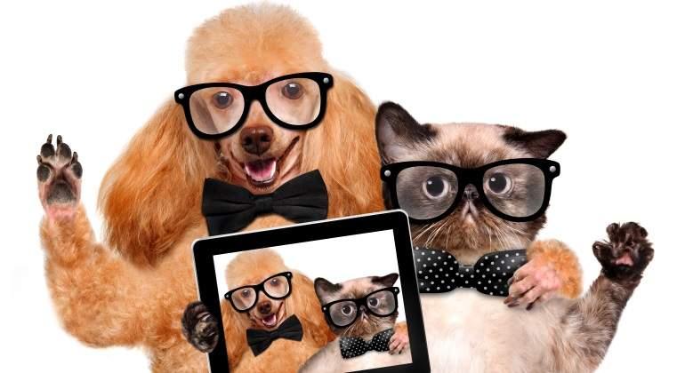 perro-gato-inteligencia-dreamstime.jpg