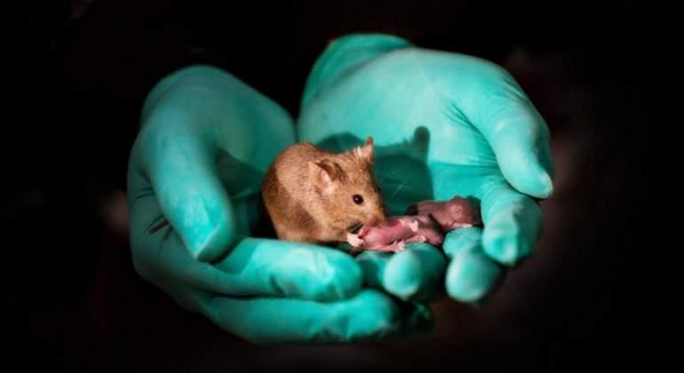 crias-bimaternas-raton-sinc.jpg